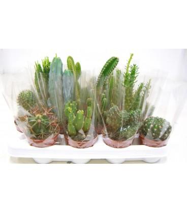 Cactus 8.5
