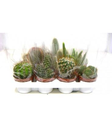 Cactus 10.5